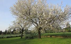 La Primavera al Vagabondo